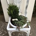 Transformar silla en macetero